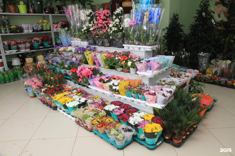 Флора дизайн магазин цветов вольск саратовская область, служба доставки