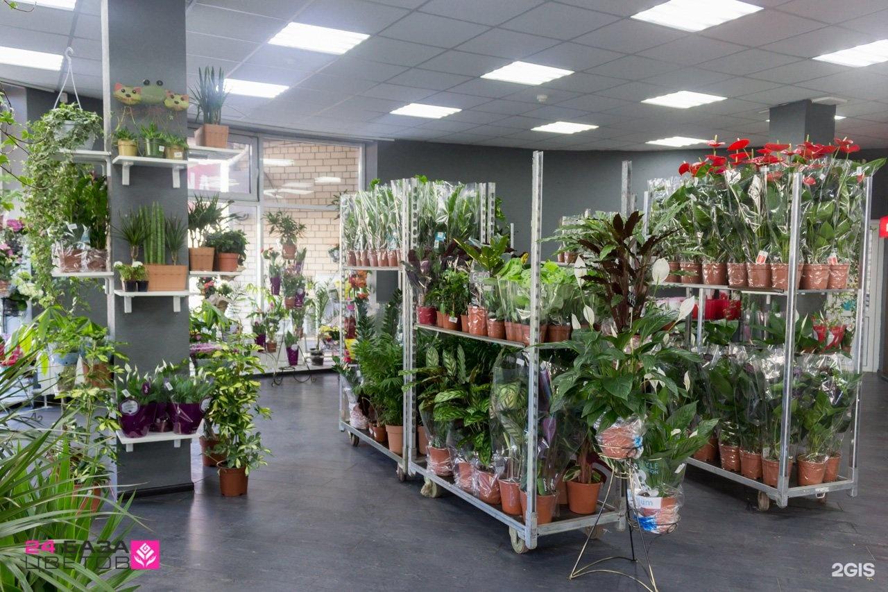 Донецк цветы опт и розница адреса магазинов, цветов для