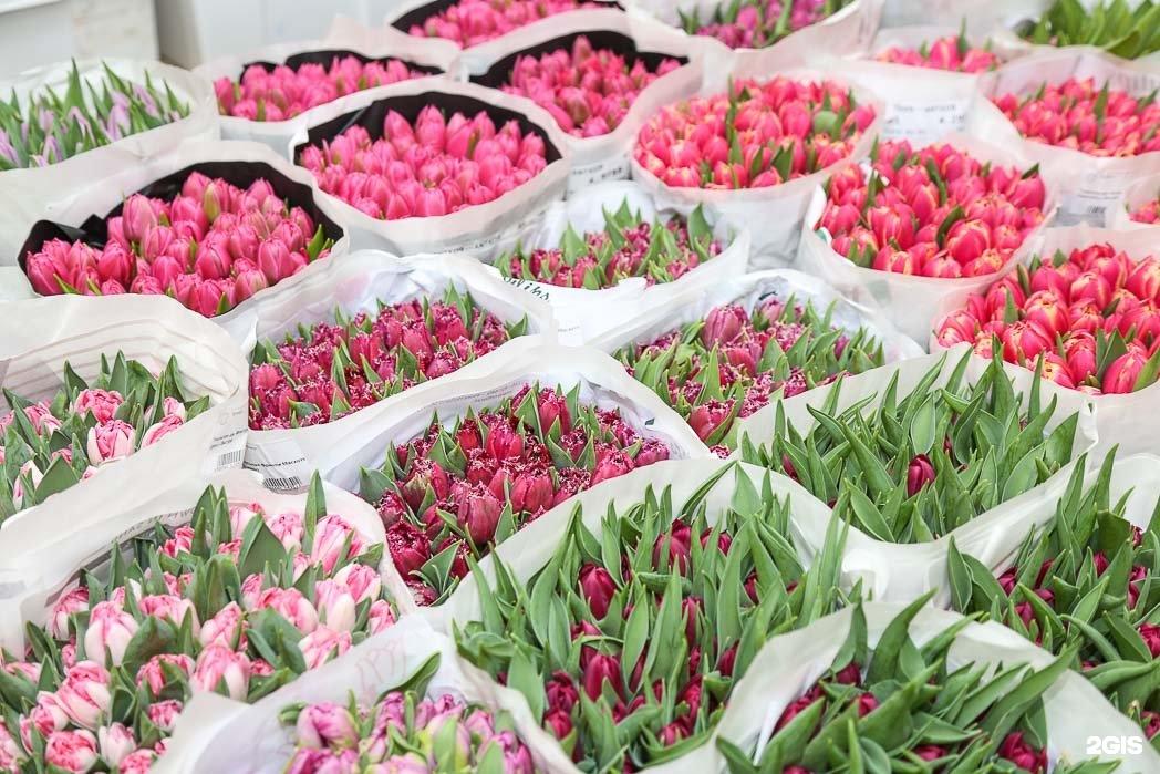 Продажа цветов оптом и цены, цветок горшке