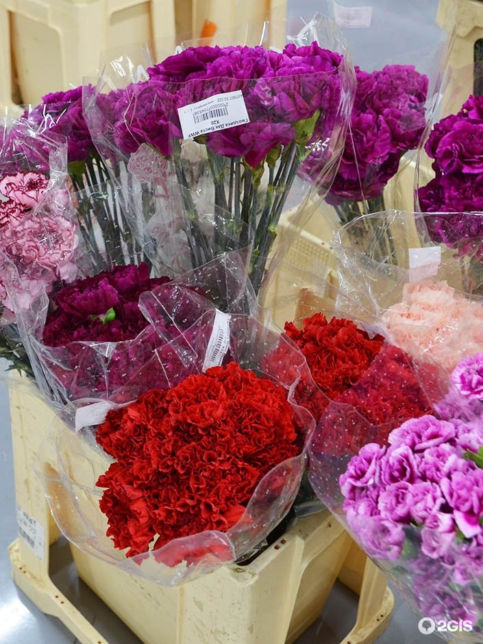 Купить цветы, совхоз имени ленина цветы оптом и розницу в горшках