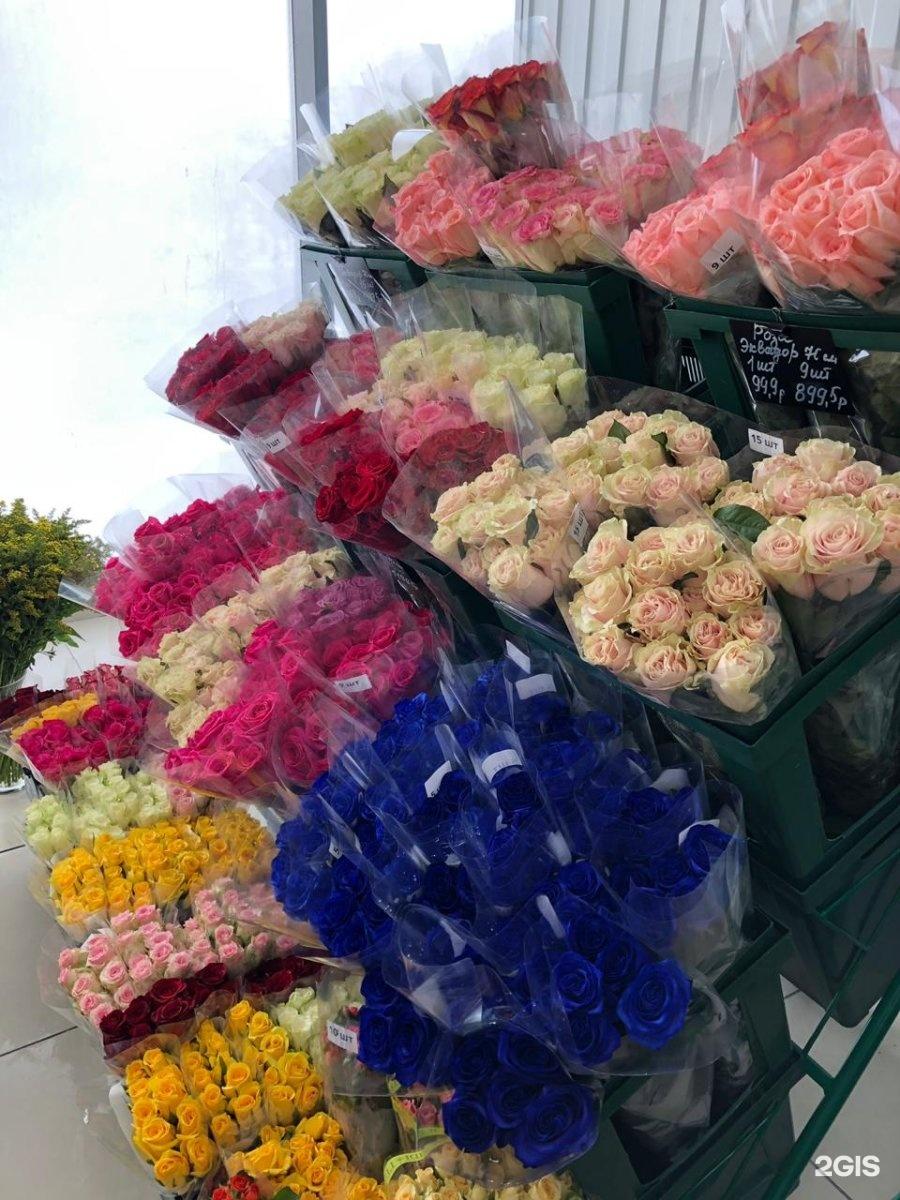 Роз картинки, оптовая база цветов ярославль богдановича