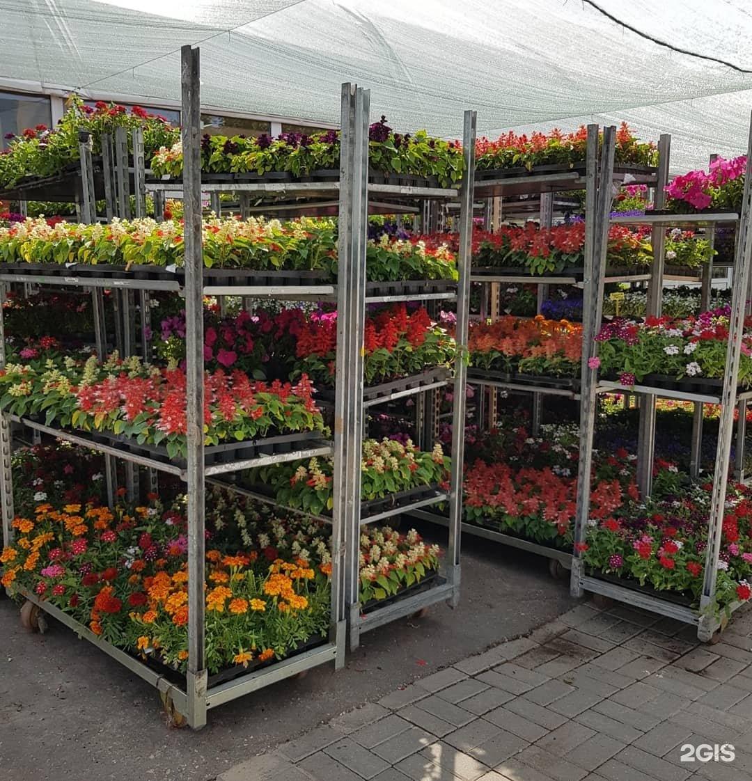 Галантус калуга купить цветы