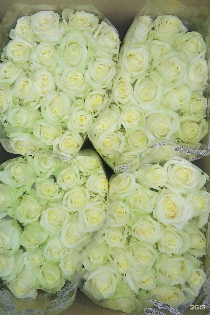 Аваланж цветы оптом брянск, цветы картинки